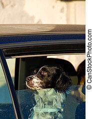 kutya, alapján, a, autó ablak