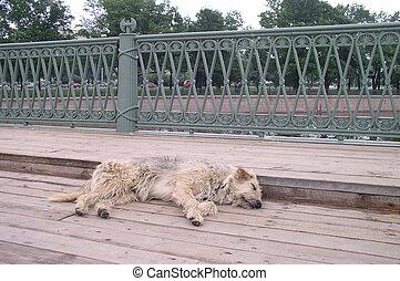 kutya, alatt, alszik