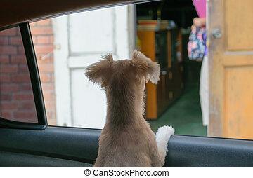 kutya, autó ablak