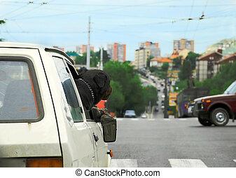 kutya, autó, ablak