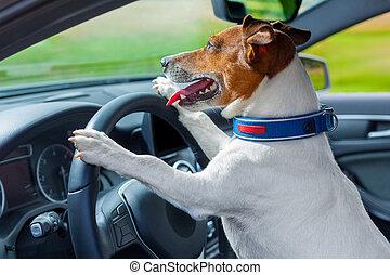 kutya, autó, kormánykerék