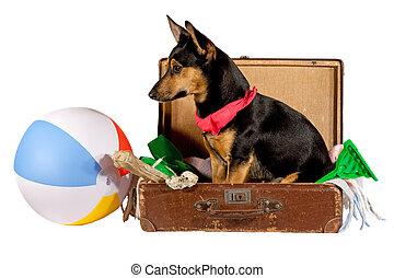 kutya, bőrönd