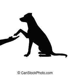 kutya, barát