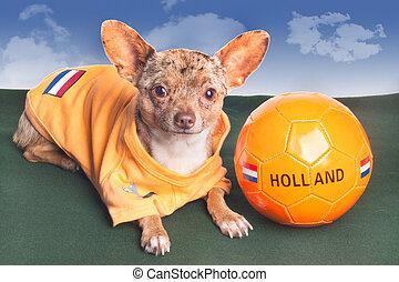kutya, biztosítások, holland, futballcsapat