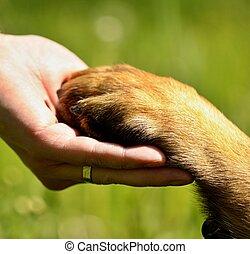 kutya, dél, kéz, mancs, ember, dél