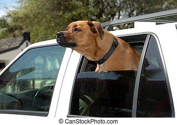 kutya, külső, autó ablak
