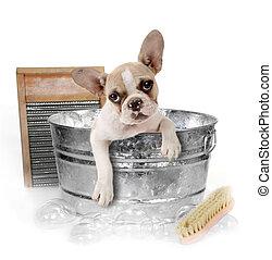 kutya, kinyerés, egy, fürdőkád, alatt, egy, mosóteknő,...