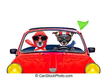 kutya, kocsikázás autó