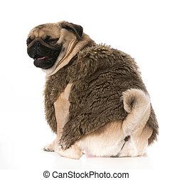 kutya, nevető