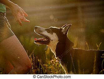 kutya, obidient
