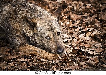 kutya, otthontalan