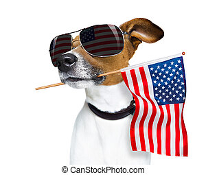 kutya, szabadság, 4, nap, július