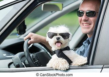 kutya, utazó, egy kocsiban