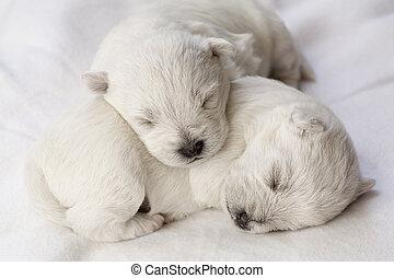kutyus, alvás