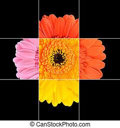 květ, barvitý, design, měsíček, gerbera, mozaika