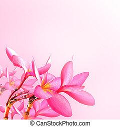 květ, grafické pozadí., karafiát, plumeria, květiny