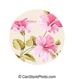 květ, hibiscus.