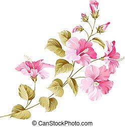 květ, ibišek