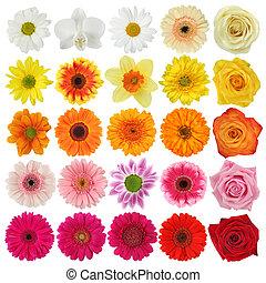 květ, vybírání