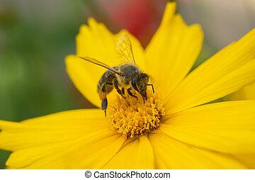 květ, zbabělý, včela