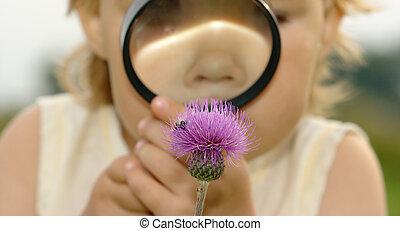květ, zrcadlo, skrz, dítě, zvetšovací sklo
