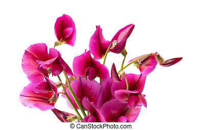 květena, canaria, babička