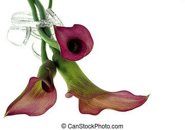 květiny, červeň