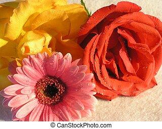květiny, 01