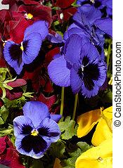 květiny, 27