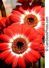 květiny, 54
