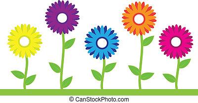 květiny, barvitý