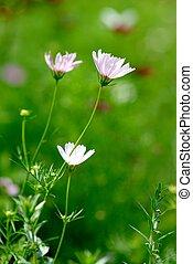 květiny, citlivý