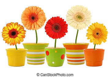 květiny, do, zasadit