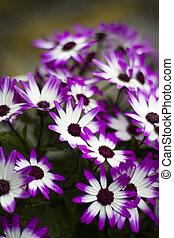 květiny, dosti