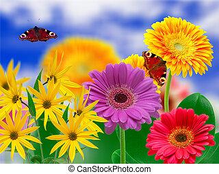 květiny, gerber