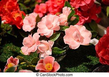 květiny, kamélie, výstava