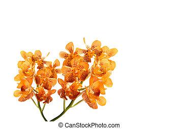 květiny, orchidea