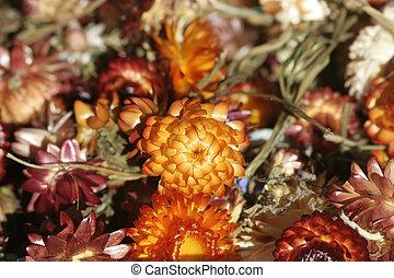 květiny, usušený
