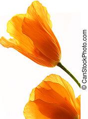 květiny, zbabělý