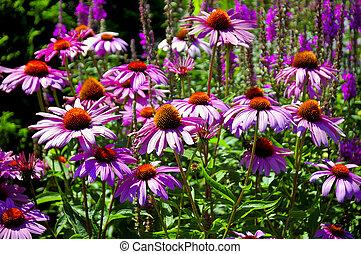 květovat zahradní