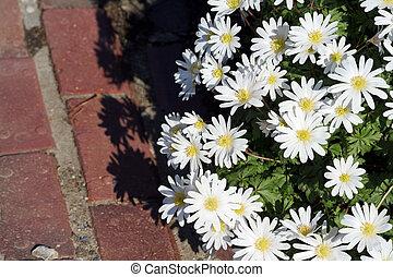 kvetoucí, květiny