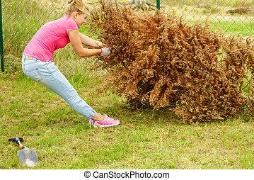 kvinde, fjerner, tørret, thuja, træ, af, baggård