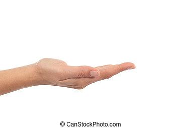 kvinde, hånd, hos, håndflade oppe