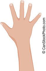 kvinna, hand.