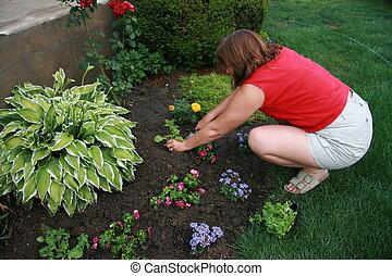 kvinna, trädgårdsarbete