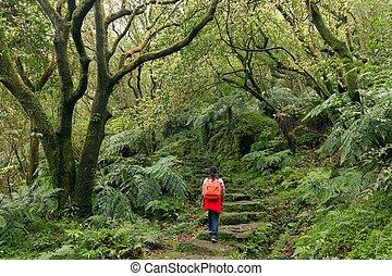 kvinna, trekking, in, grön, suntropical, skog