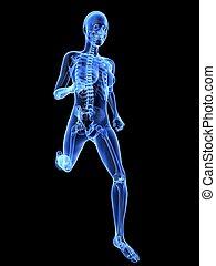 kvinnlig, joggare, röntga, -