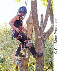kvinnlig, träd kirurg