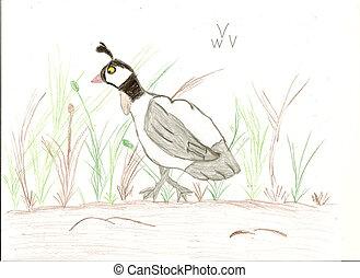 Potlood Tekenen Vogel Potlood Tekenen Gebruik Verticaal Vogel