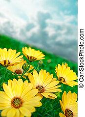 kwiat, żółty